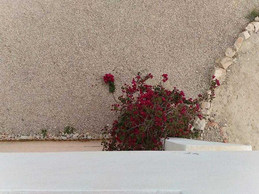 Paladar la Casablanca jardín